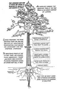 Tree Functional Parts