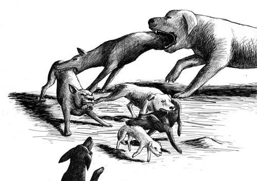 dog_eat_dog_world_by_nerafinuota